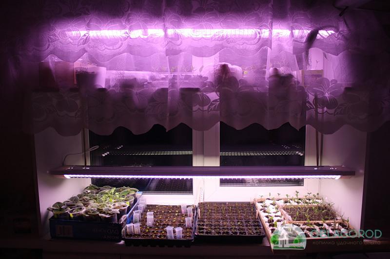 Выращивание и пересадка саженцев фото