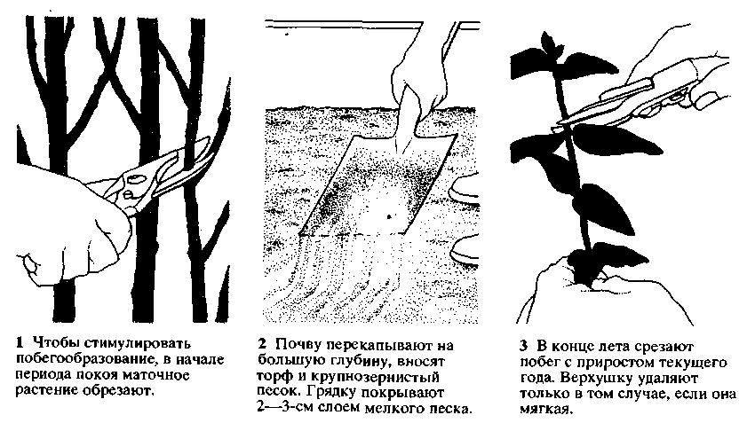 Способы размножения