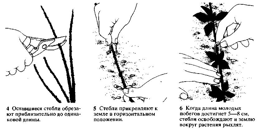Способы размножения фото