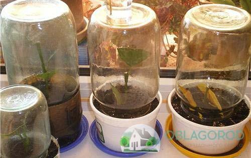Условия выращивания фото