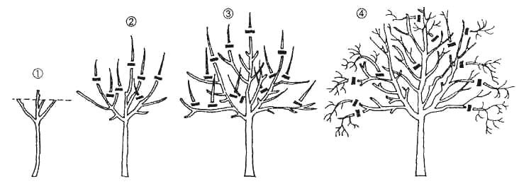 Основные этапы обрезки и задействованные при этом техники