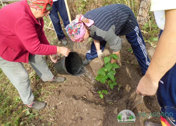 Как сажать растение