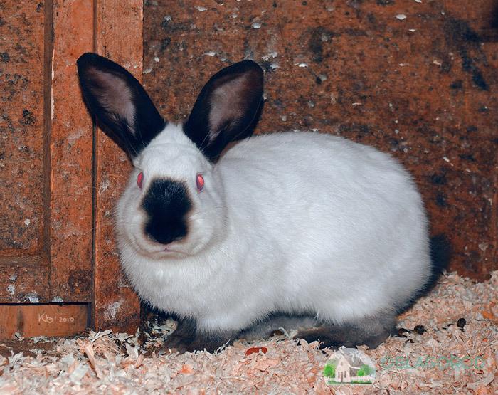 Как ухаживать за декоративными кроликами в домашних условиях
