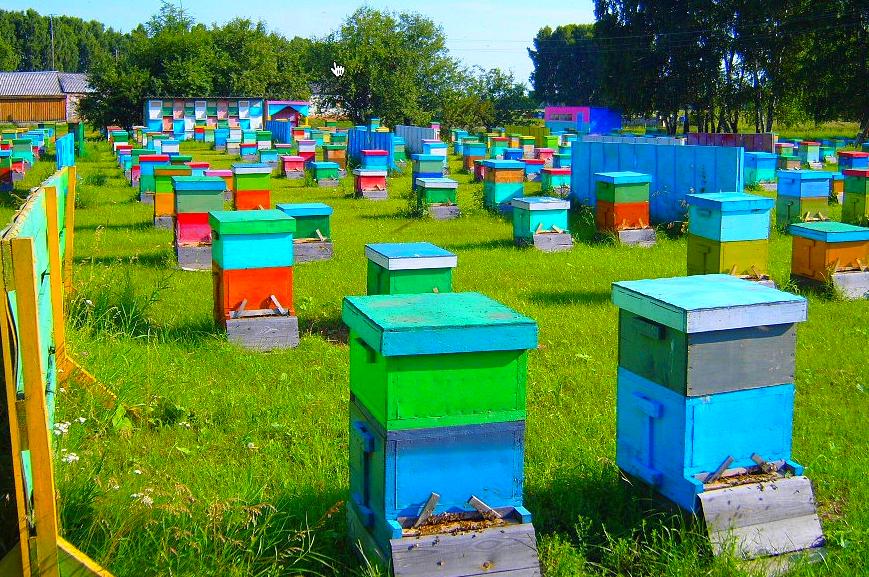 Особенности пчеловодства с использованием многокорпусных ульев