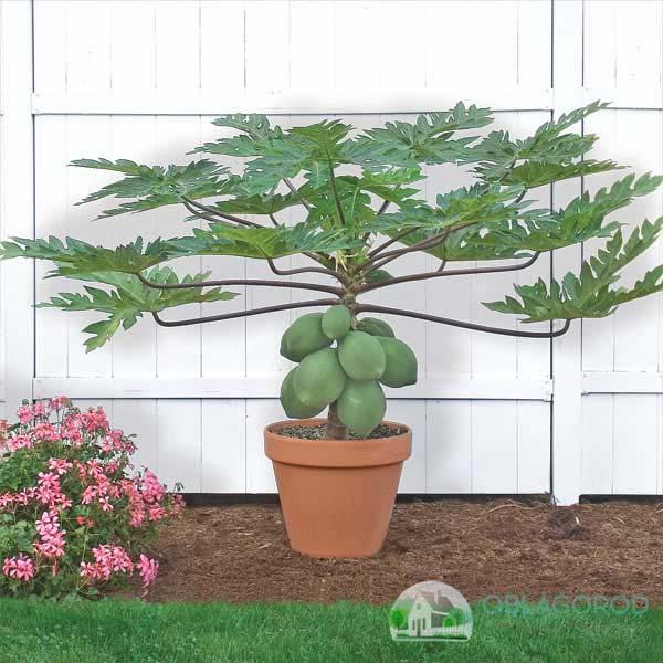 Как вырастить дерево