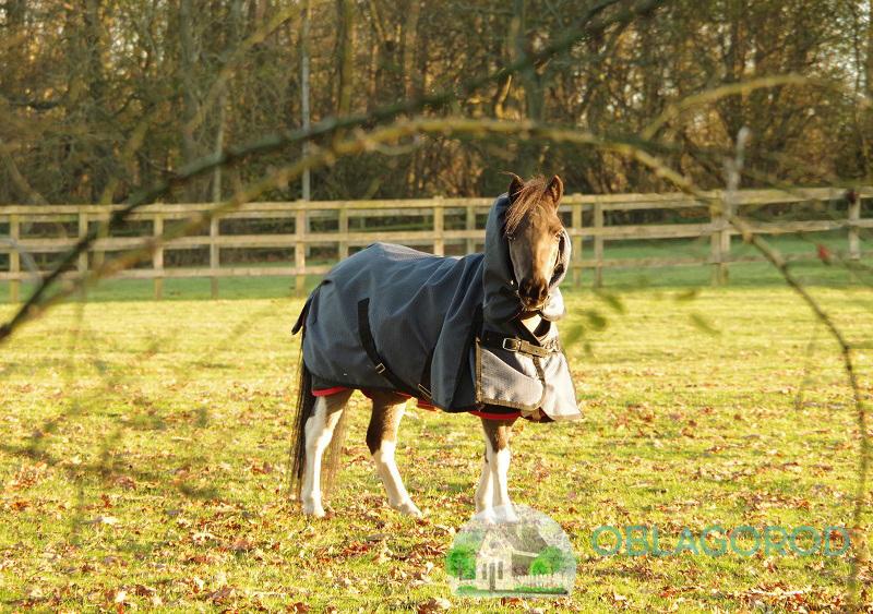 Особенности ухода за маленькими лошадьми