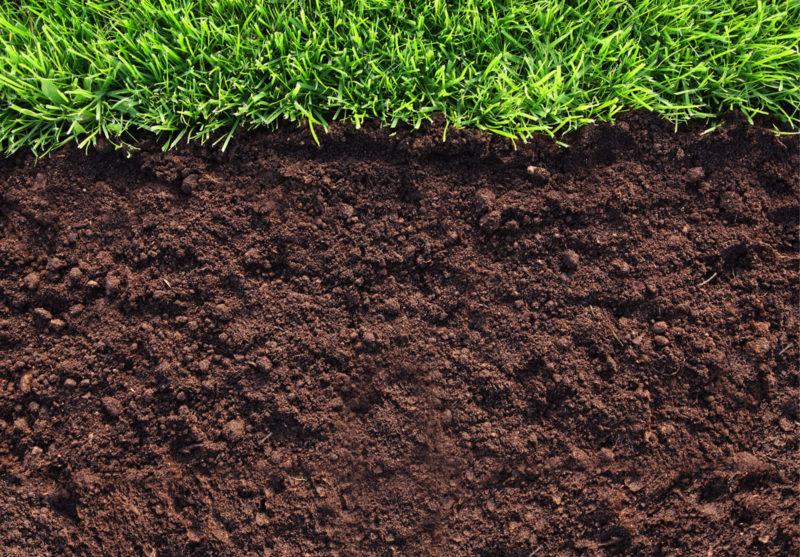 Правильная подготовка почвы