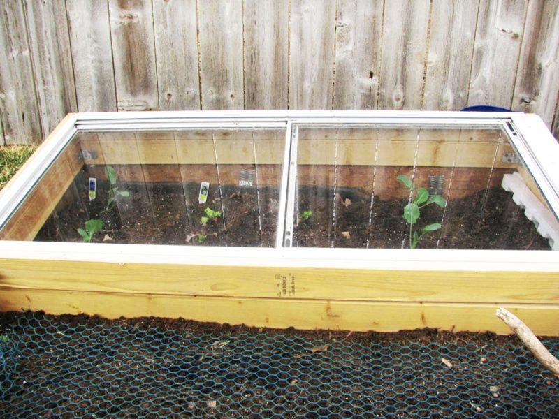 Высаживание семян на рассаду и в открытый грунт