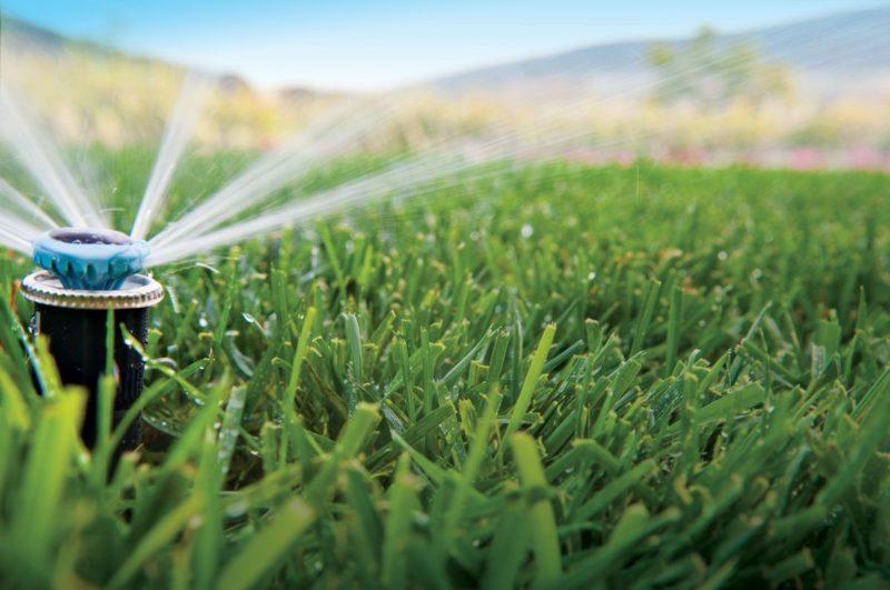 Увлажнить среду с помощью полива