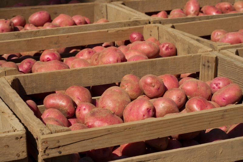 Возможно хранение картофеля на балконе.