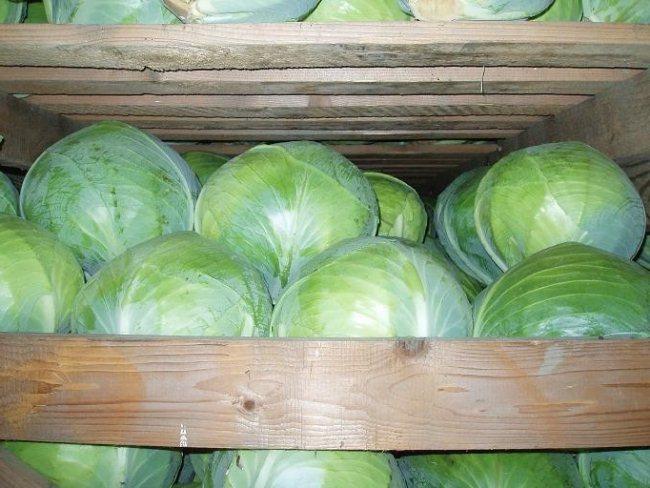 Просушка должна осуществляется и непосредственно в помещении, где будет храниться урожай