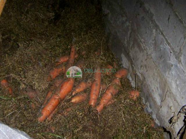 Несколько способов хранения овощей