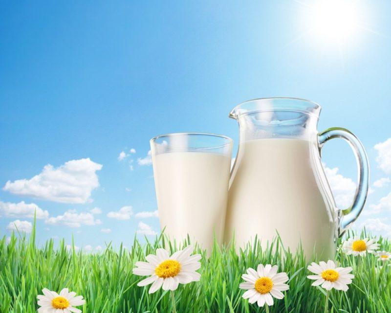 Ежедневное получение вкусного молока