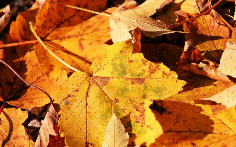 Засохшие ветки и листья
