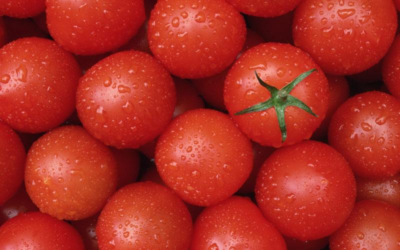 Происхождение томатов или почему возник спор?