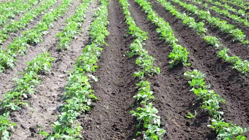 Подготовка и выбор почвы под посадку