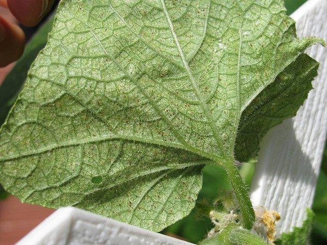 Тщательное промывание наземной части растений