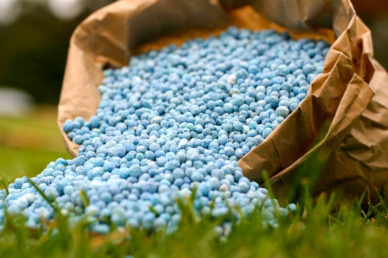 Зола и азотные удобрения в сочетании губительны для овощей