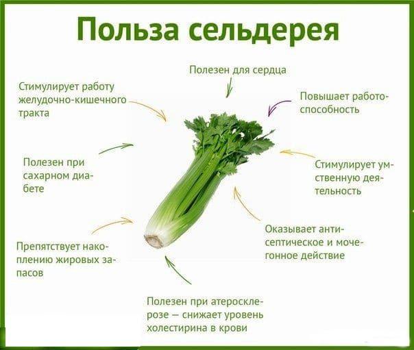 Польза и вред употребления этого овоща