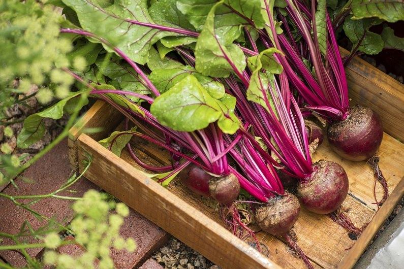 Подготовленные овощи выкладывают в ящики или коробки