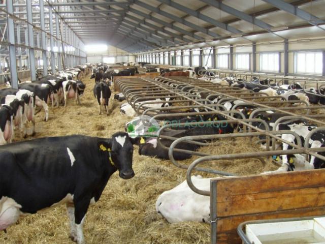 Помещение и правила содержания скота фото