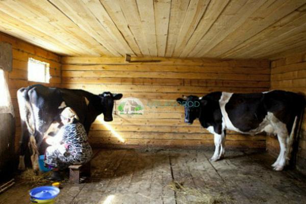 Помещение и правила содержания скота