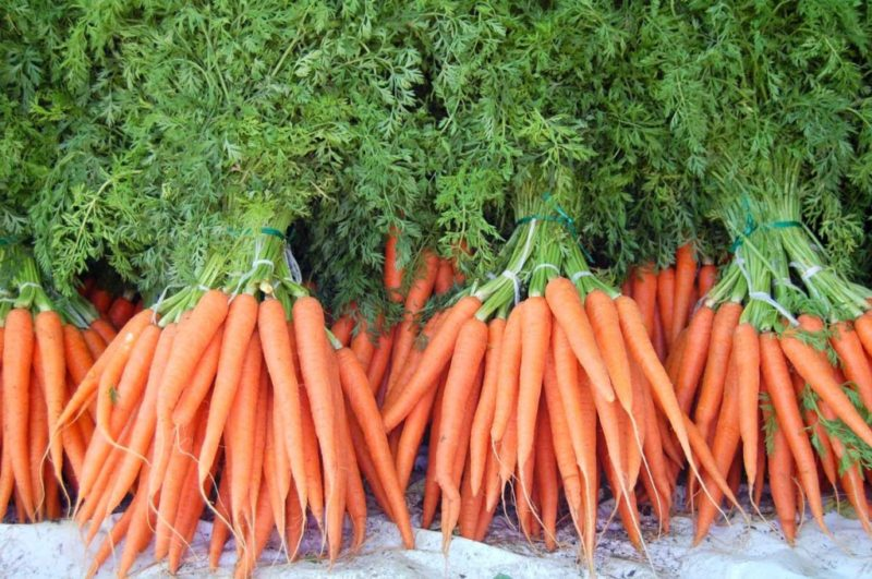 Посадка моркови на зиму