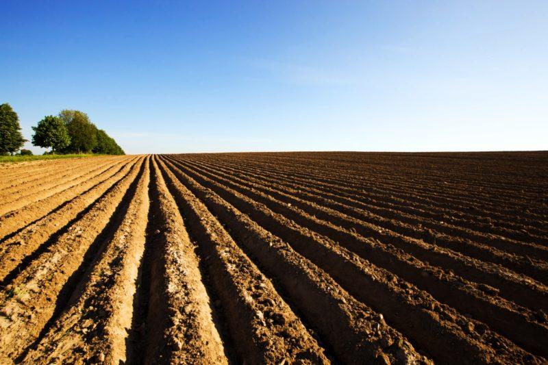 Подготовка почвы под картофель
