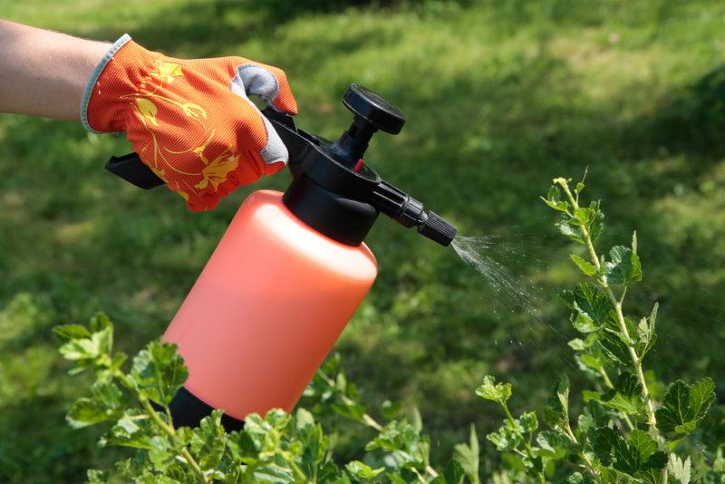 Для профилактики заражения растений применяются химические средства.