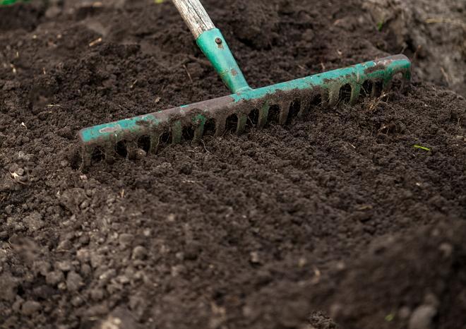 Сбор лишних растений с грядки после сбора урожая