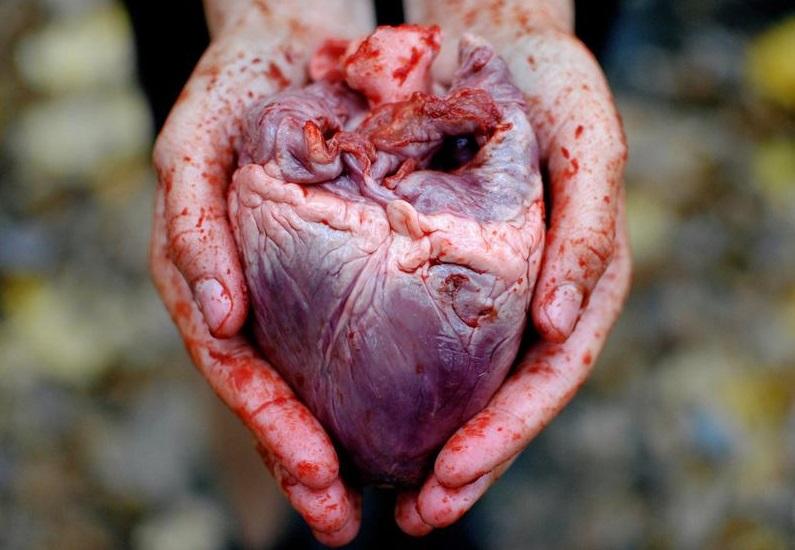 В данном овоще содержится огромное количество калия – очень важного элемента для человеческого организма, в частности, для его сердечнососудистой системы.