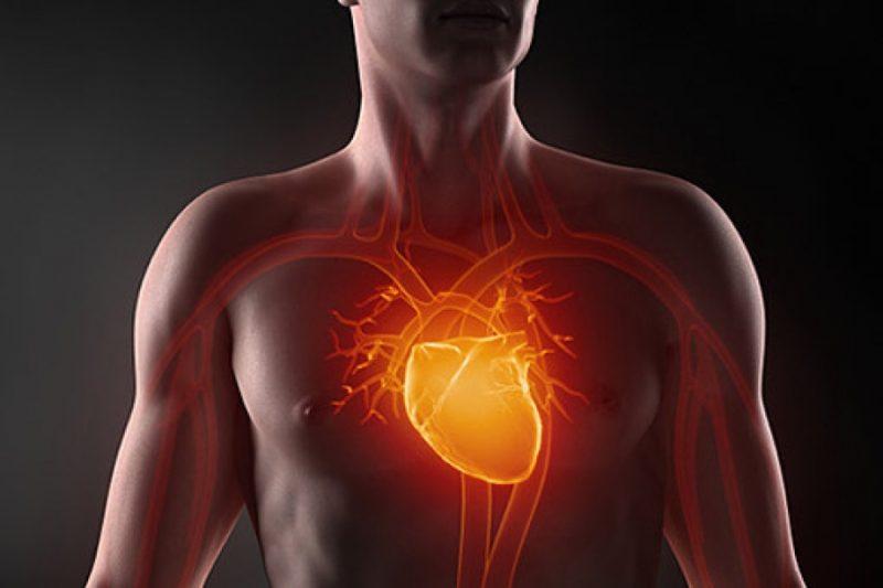 Регулярное употребление цветной капусты способствует нормализации сердечного ритма, улучшает водно-солевой баланс, стабилизирует кровяное давление.