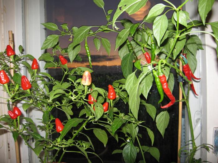Место, где располагаются емкости с растениями, должно находиться на южной стороне дома, где солнце светит больше всего.