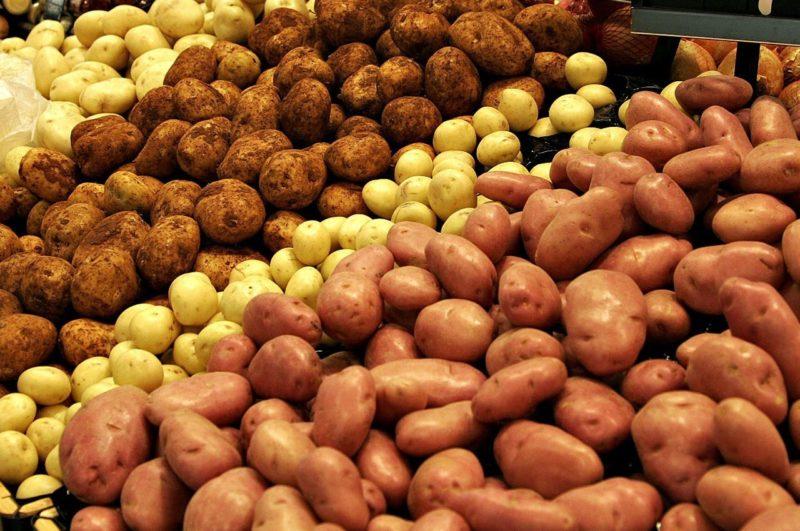 Картофель – наиболее распространенный и востребованный вид пищи для хрюшек.