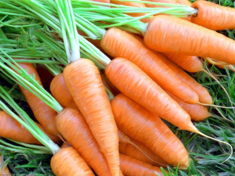 Морковь – очень полезный не только для людей, но и животных овощ.