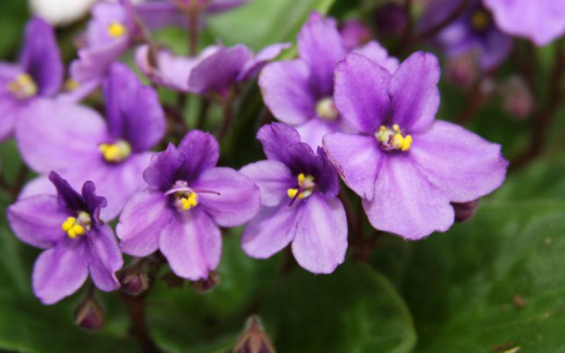 В период цветения интенсивность полива следует увеличить
