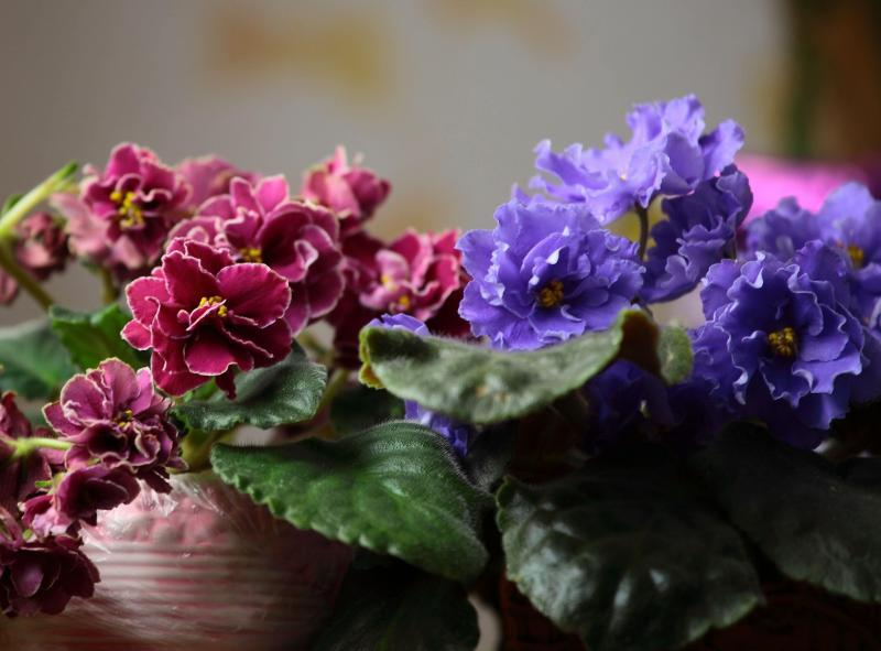 Удобрение цветов