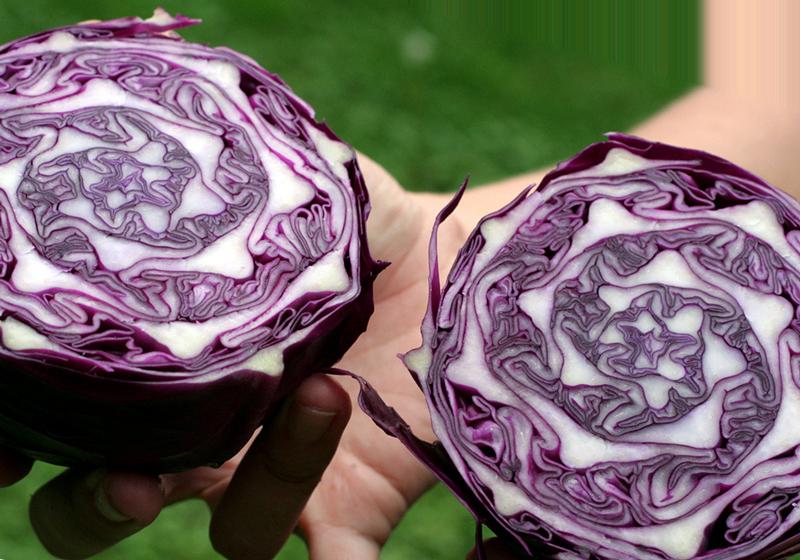 Фиолетовая капуста – очень качественный диетический продукт, не оказывающий значительного давления на пищеварительную функцию человека, а потому он рекомендован большинству людей