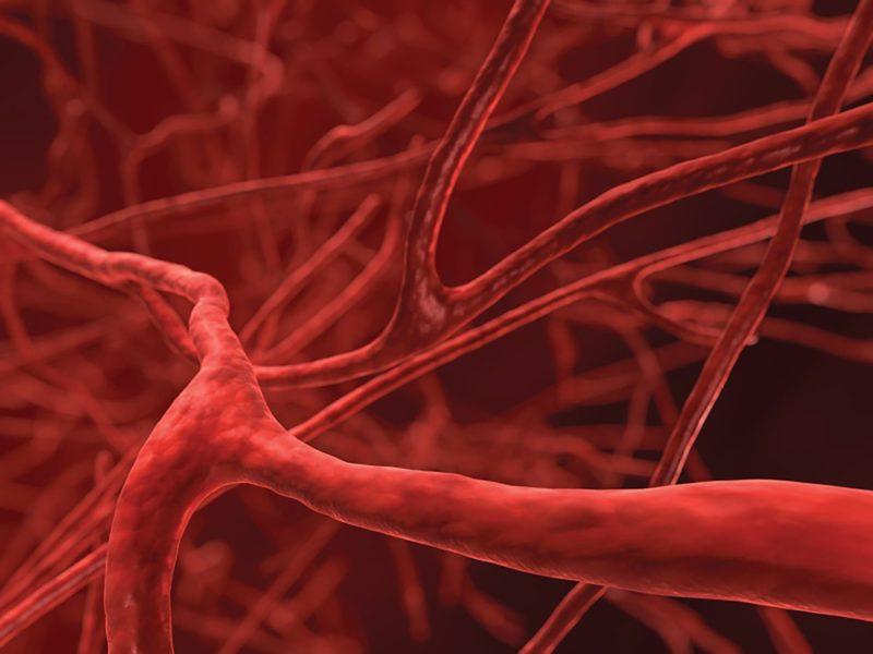 Существенным образом повышается эластичность кровеносных сосудов