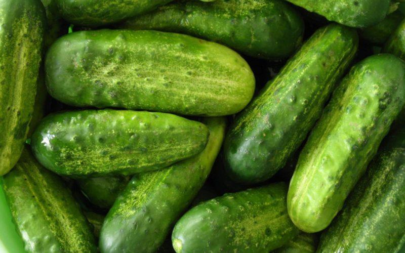 Как вырастить огурцы без горчинки