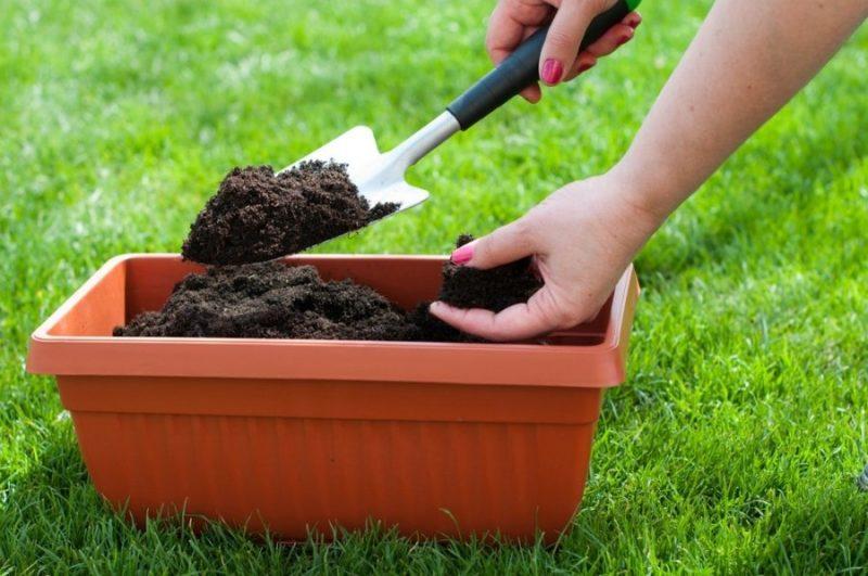 Виды садовых фиалок и их особенности фото