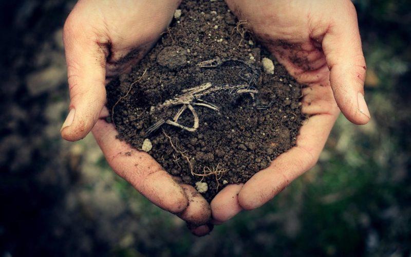 Огородная земля, торф и перегной, в пропорциях 4:1:1