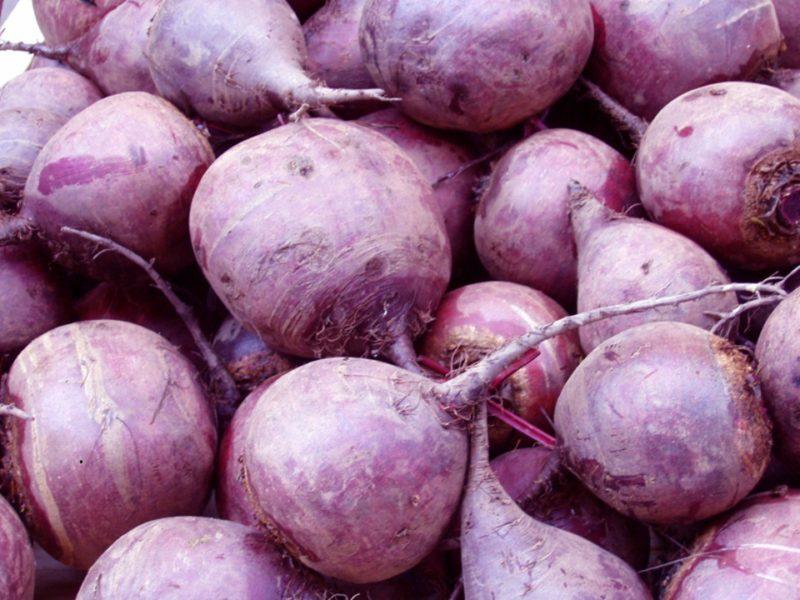 Сахаристость в корнеплоде при выборе сорта