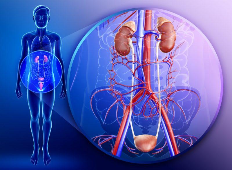 Сильное воздействие на мочеполовые органы