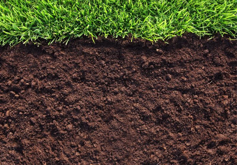 Выбор почвы и полив прихотливой азалии