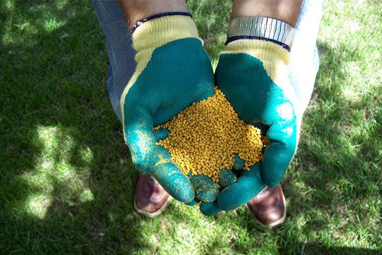 Подкармливать растение следует фосфорными и калийными удобрениями.