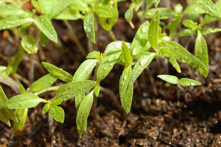 Агротехнический метод