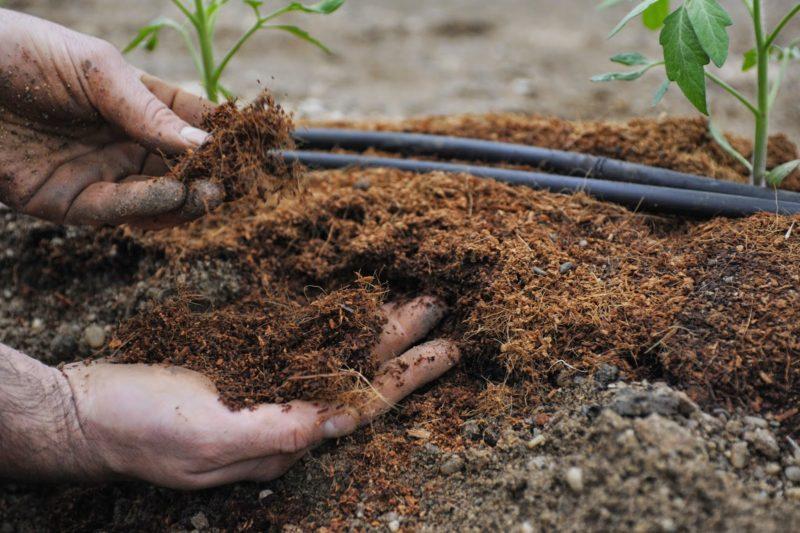 Каждый год необходимо менять вид удобрений
