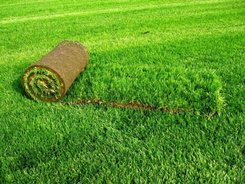 Характеристики и преимущества рулонного газона