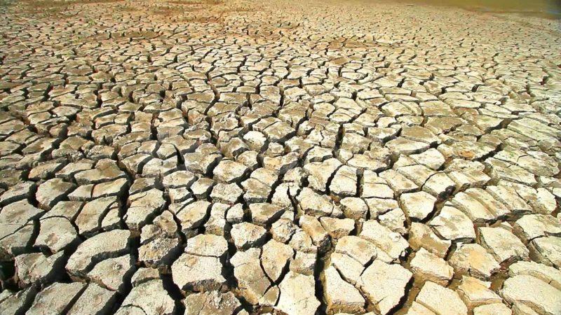 Устойчивость к засухам, выпреванию, повышенной влажности и вытаптыванию
